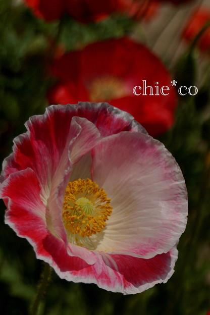 写真: くりはま花の国-292