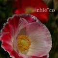 くりはま花の国-292