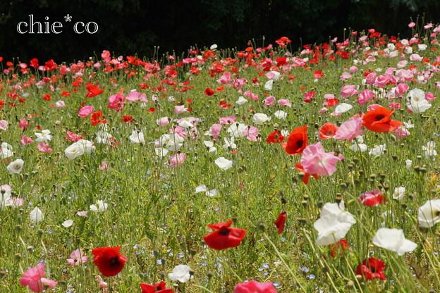 写真: くりはま花の国-294