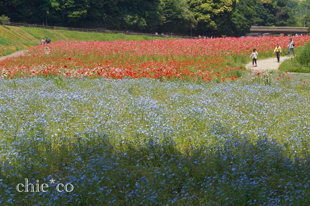 写真: くりはま花の国-302