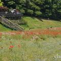 写真: くりはま花の国-303