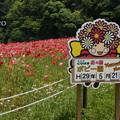 写真: くりはま花の国-308
