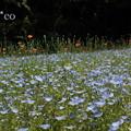写真: くりはま花の国-311