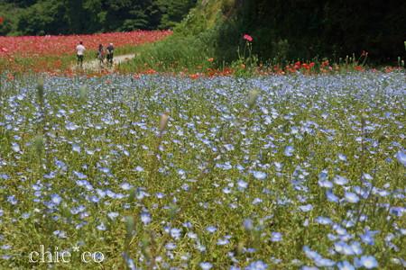 くりはま花の国-313