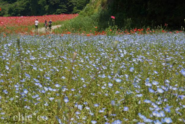 写真: くりはま花の国-313