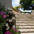 写真: イタリア山庭園-164