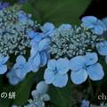 写真: 瀬戸神社~山あじさい-383