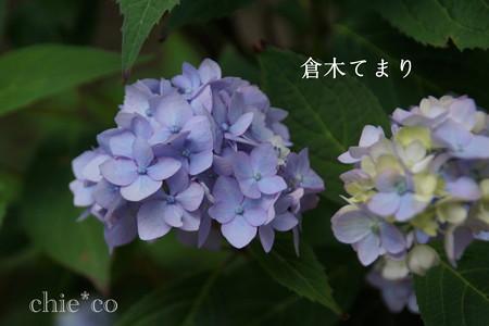 瀬戸神社~山あじさい-398