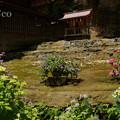 写真: 瀬戸神社~山あじさい-426