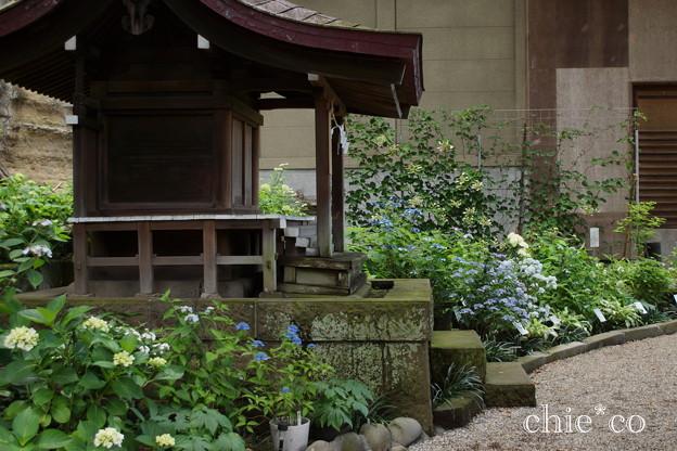 瀬戸神社~山あじさい-429