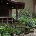 写真: 瀬戸神社~山あじさい-429
