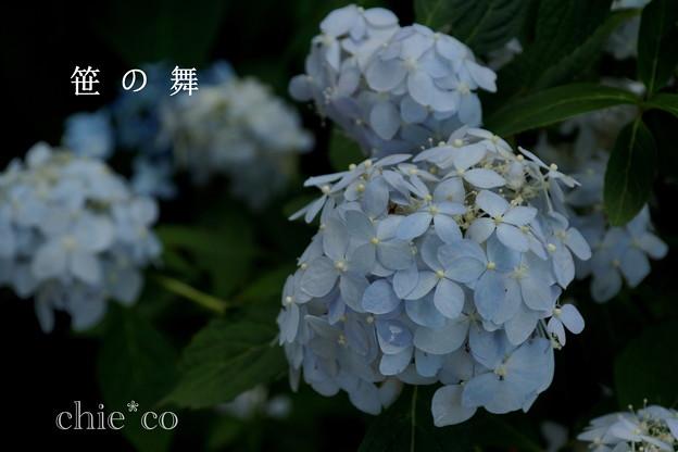 瀬戸神社~山あじさい-440