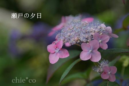 瀬戸神社~山あじさい-461