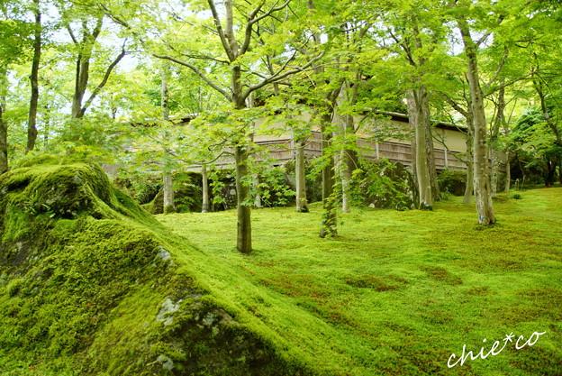 写真: 箱根美術館-185