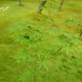 写真: 箱根美術館-188