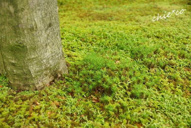 写真: 箱根美術館-191