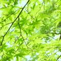 写真: 箱根美術館-194
