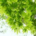 写真: 箱根美術館-200