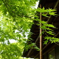 写真: 箱根美術館-202