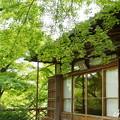 写真: 箱根美術館-203