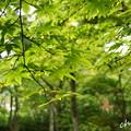 写真: 箱根美術館-206