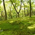 写真: 箱根美術館-214