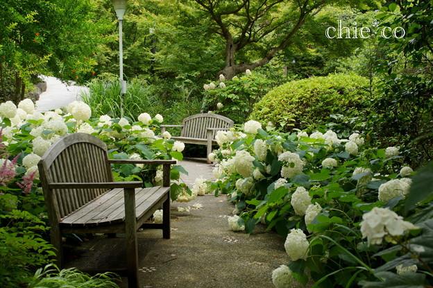写真: 浄妙寺-123