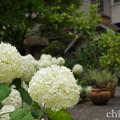 写真: 浄妙寺-135