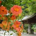 写真: 鎌倉-133