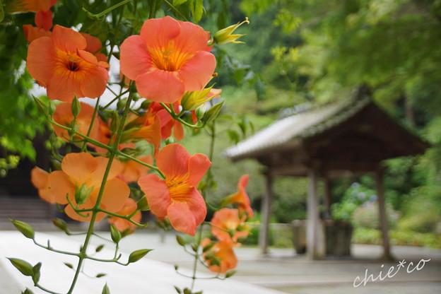写真: 鎌倉-134