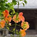 写真: 鎌倉-136