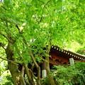 写真: 鎌倉-155