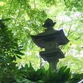 写真: 鎌倉-159