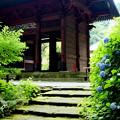 写真: 鎌倉-163