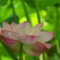 写真: 三渓園-230