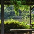 写真: 三渓園-244