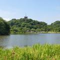写真: 三渓園-245