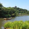 写真: 三渓園-246