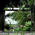 写真: 鎌倉-508