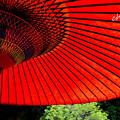 写真: 野点傘。。2