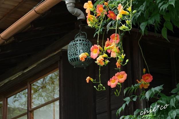 写真: 鎌倉-518