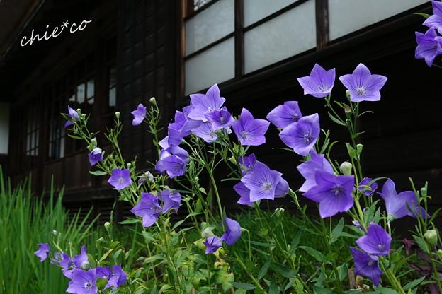 写真: 鎌倉-525