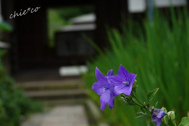 写真: 鎌倉-528