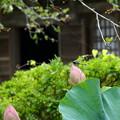写真: 鎌倉-535