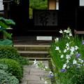 写真: 鎌倉-555