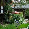 写真: 桔梗と芙蓉と凌霄花の彩る風景。。