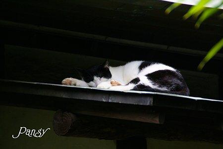 お茶室の眠り猫・・