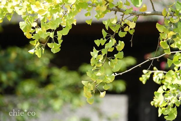 写真: 西方寺-258