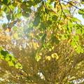 写真: 里山ガーデン-240
