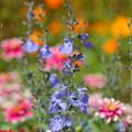 写真: 里山ガーデン。。-298